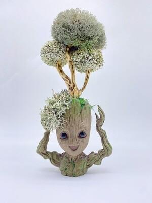Дерево из Цетрарии в кашпо «Грут»