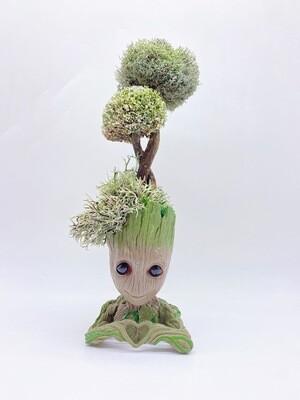 Дерево из цетрарии «Грут»