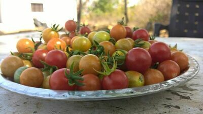 Wild Cherry Tomatoes 1 Kg [Feb -April]