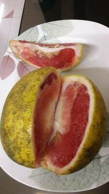 Red Pomelo (chakrota) 2 Kgs [Pre-Order: Available in Jun-July]