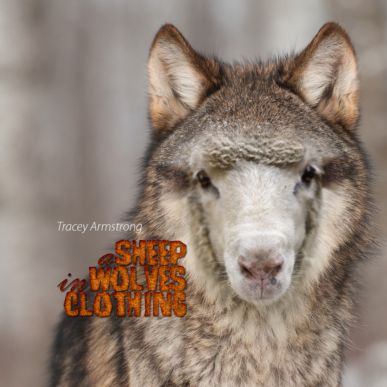 A Sheep in Wolves Clothing