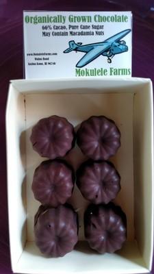 Giant Whole Macadamia Nut in Chocolate