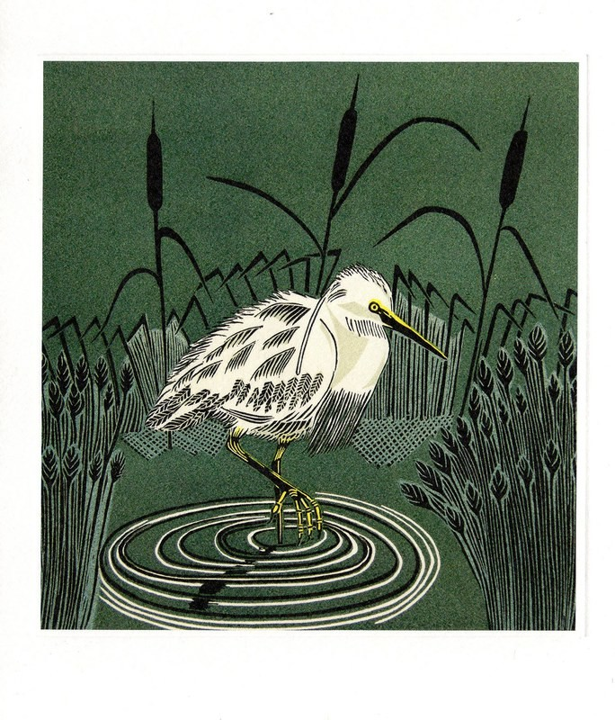 Little Egret  - Printmakers Card