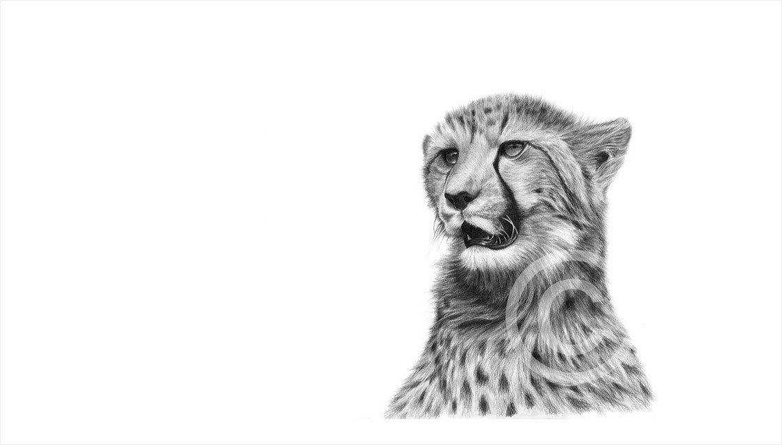 """""""Young Cheetah"""" 297mm x 148mm small print on paper"""