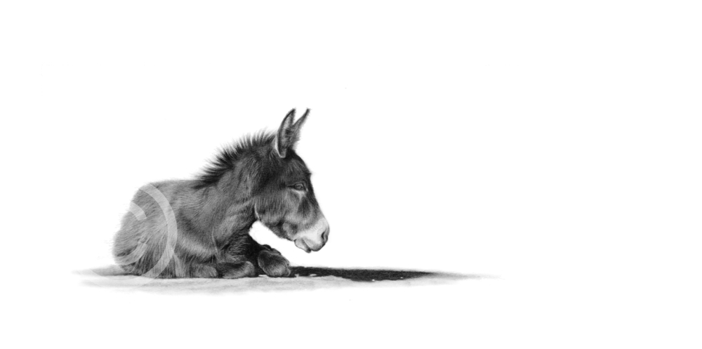 """""""Little Donkey"""" 297mm x 137mm small print on paper"""