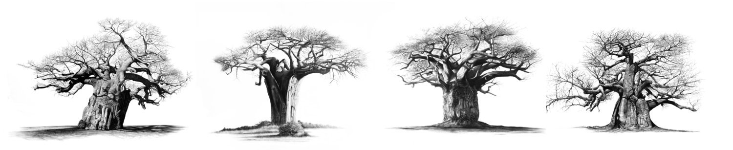 """""""The Four Sentinels"""" 1120mm x 230mm stretched canvass print"""