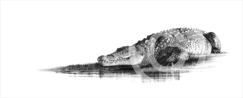 """Suncatcher"" 594mm x 218mm large print on paper"