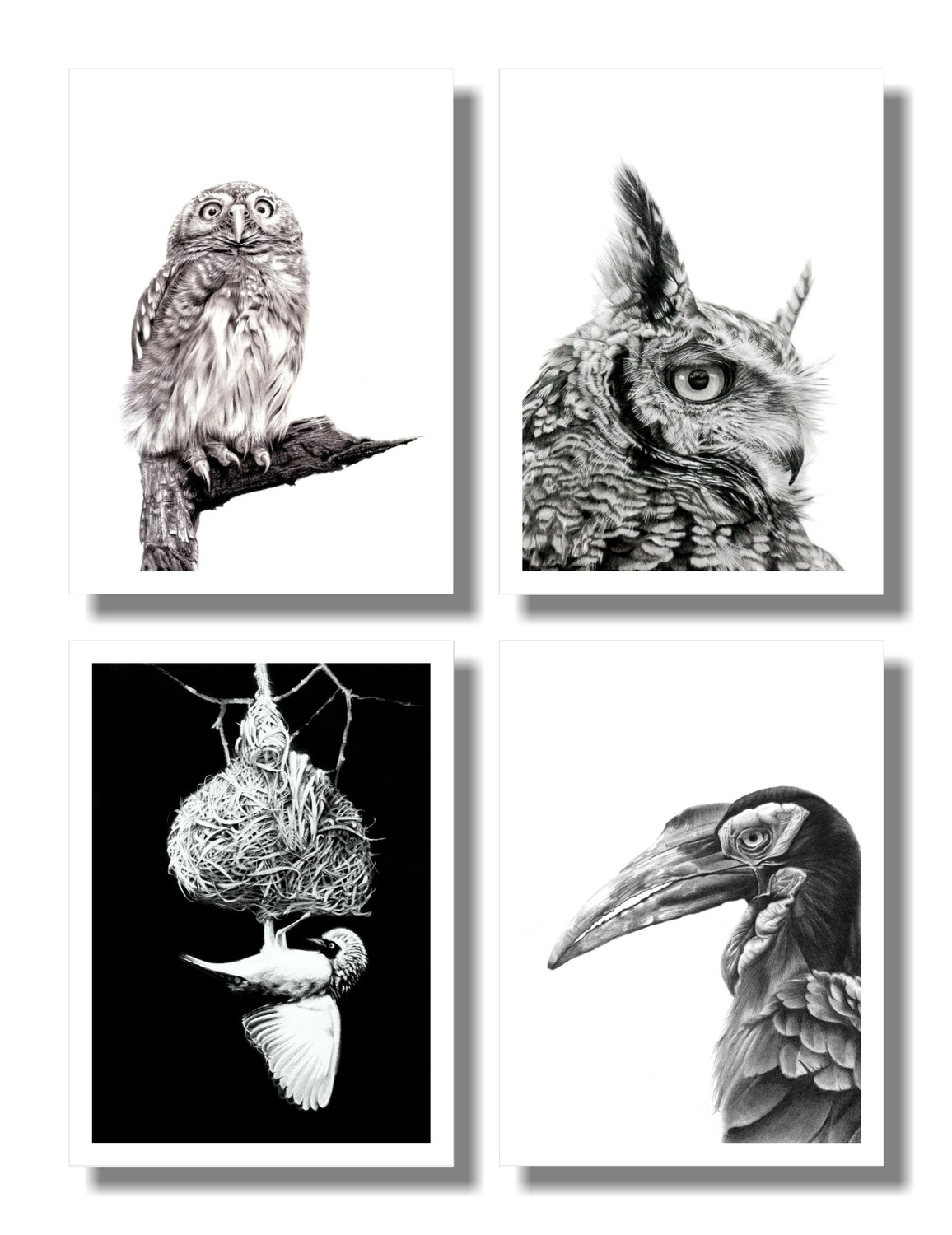 """ African Birds"" set of 4 A5 prints on paper"