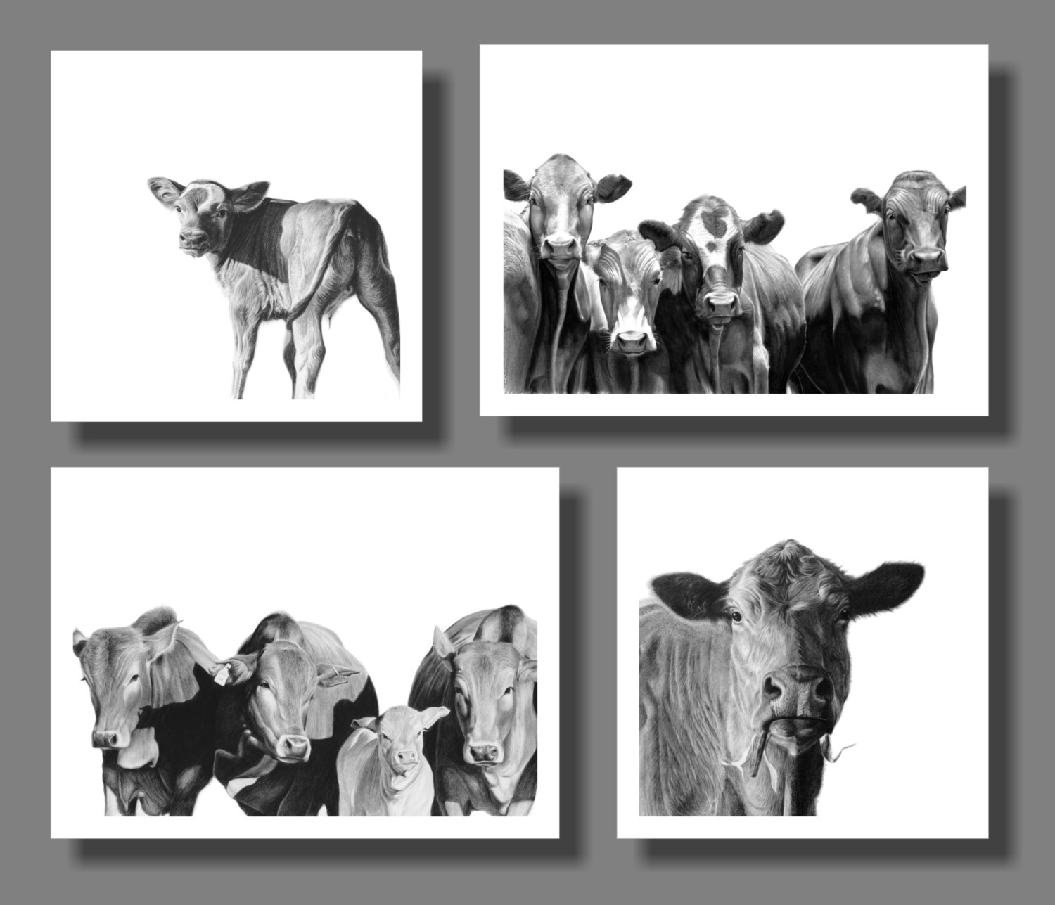 """""""Cows"""" set of 4 A5 prints on paper"""