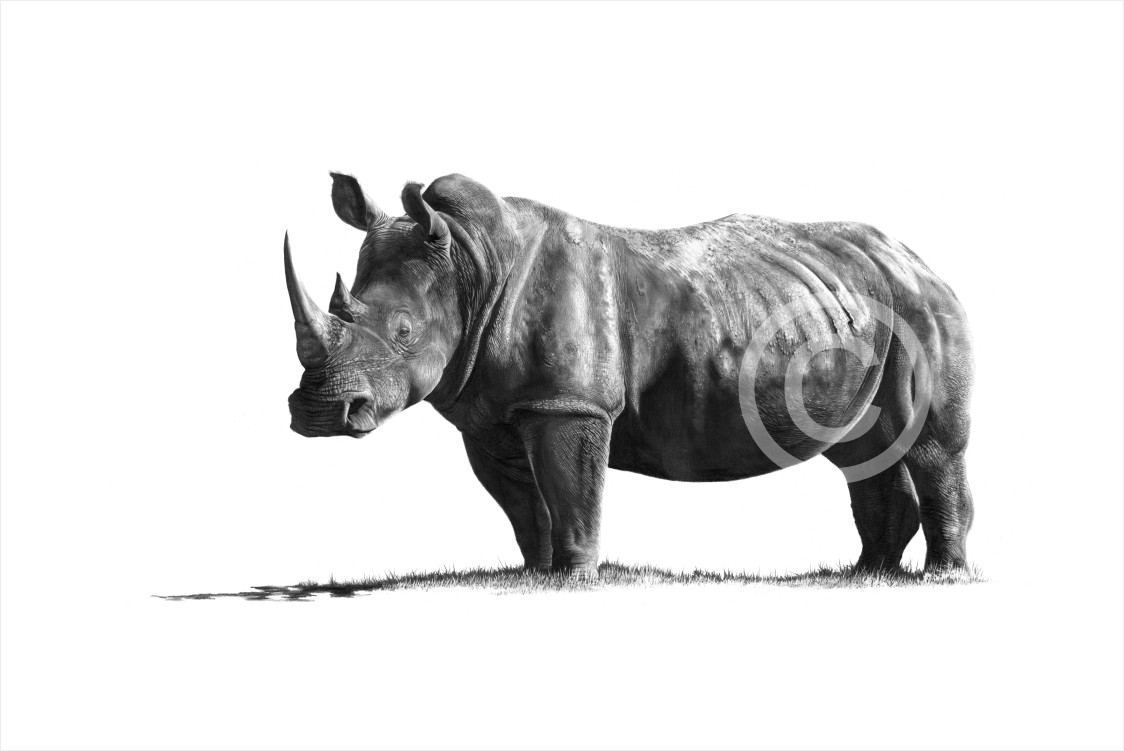 """Ndiyekele"" 297mm x 191mm small print on paper"