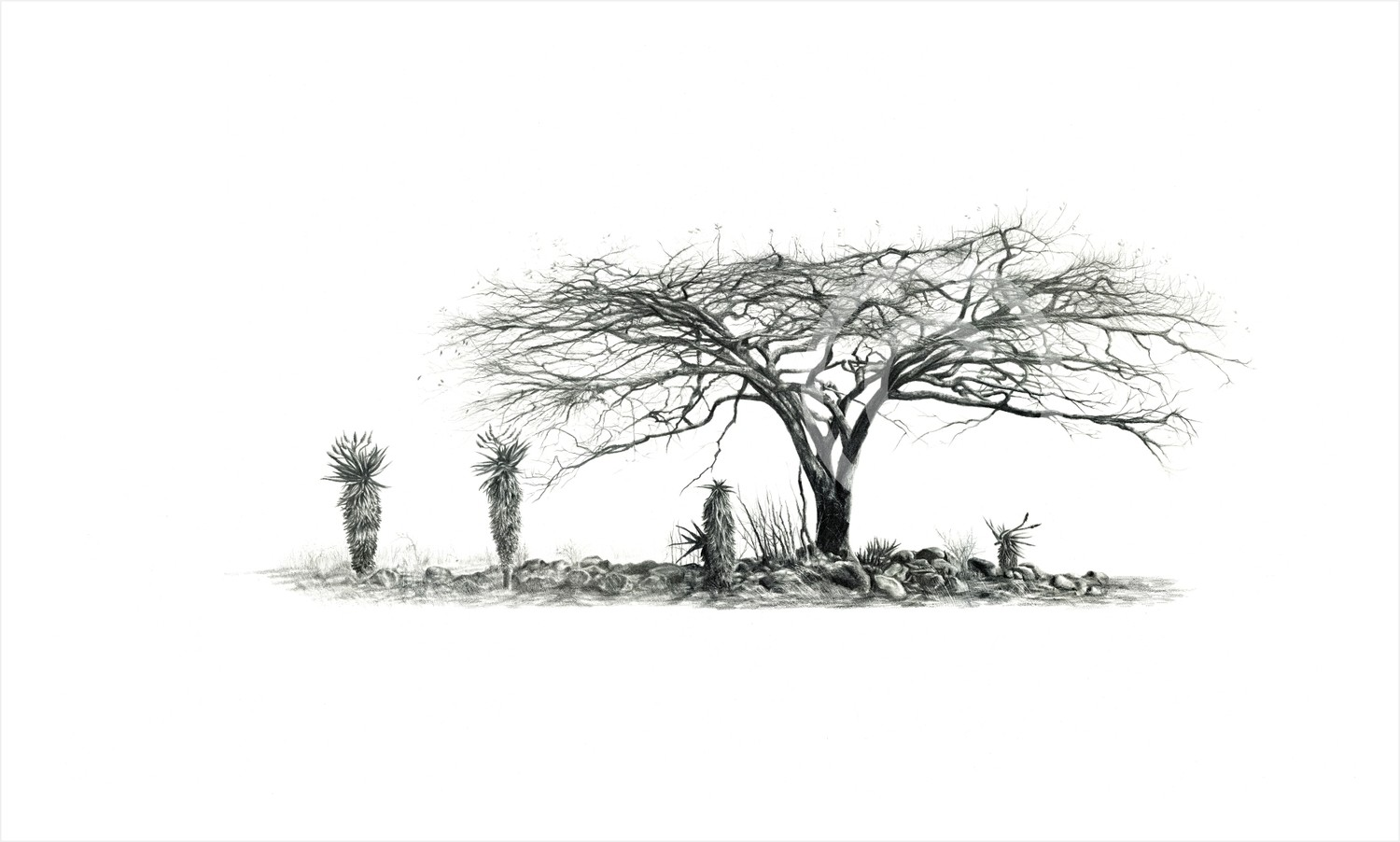 """Aloe Thicket"" 297mm x 156mm small print on paper"