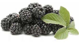 Fresh Blackberries, Blackberries (Priced per 6 oz Container)