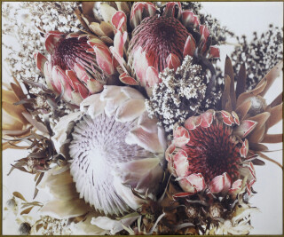 Oak Framed Canvas Print - Pink Protea 120x100cm