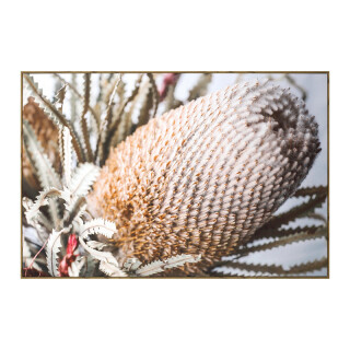 Oak Framed Canvas Print - Banksia 120x80cm
