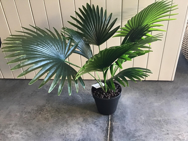 Fan Palm 45cm