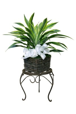 Small Premium Foliage in Decorative Basket