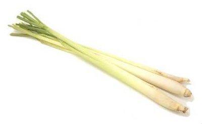 Lemongrass  -  Cymbopogon citrates   |   India   |   Conventional