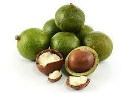 Macadamia Nut, Organic Carrier Oil - 1 fl oz (30 ml)