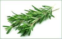Rosemary Hydrosol – 4 fl oz (120 ml)