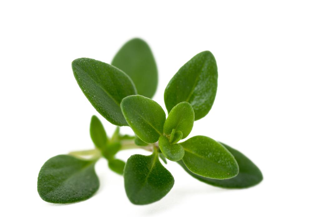 Oregano Pure Essential Oil - Organic - Morocco with Analysis Report