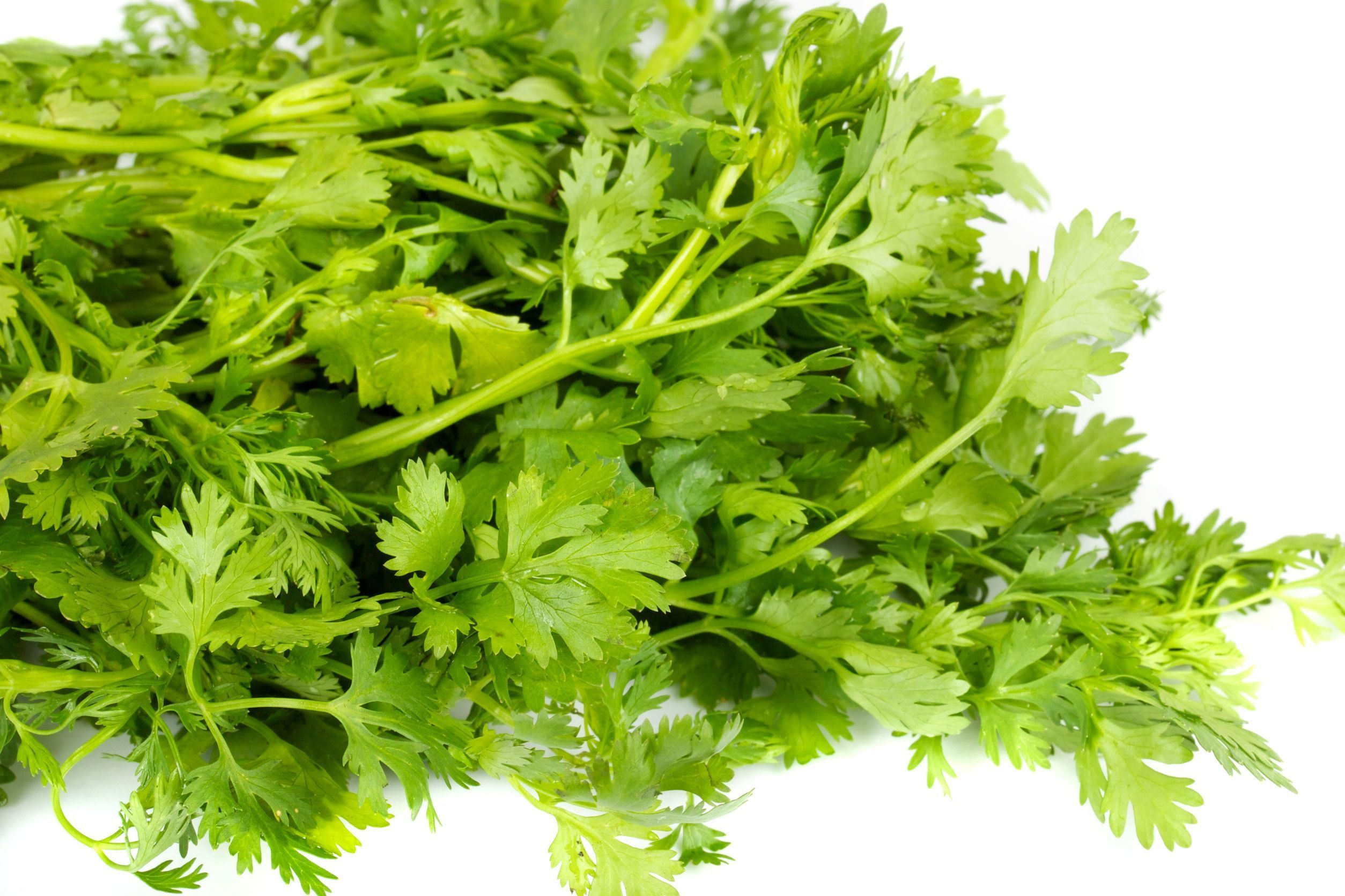 Coriander Seed Pure Essential Oil Analysis Report