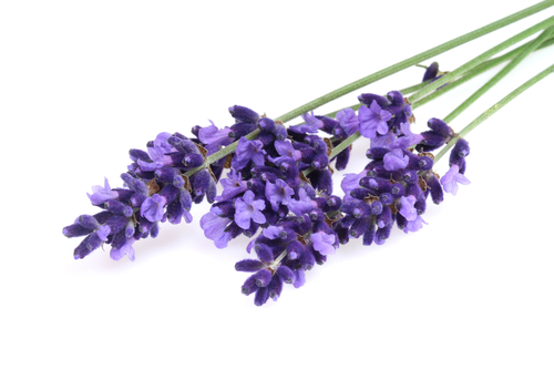 Lavender, French Pure Essential Oil - 0.5 fl oz (15 ml) with Analysis Report