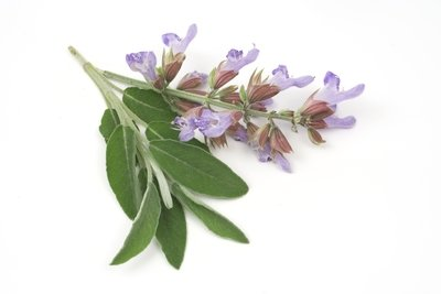 Clary Sage Pure Essential Oil Analysis Report