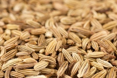 Sweet Fennel Pure Essential Oil - Hungary - GC Report