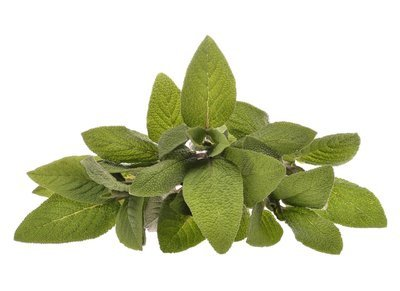 Sage officinalis (Hungary) Pure Essential Oil GC Report