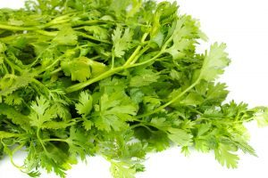 Coriander Seed Pure Essential Oil Analysis Report 00529