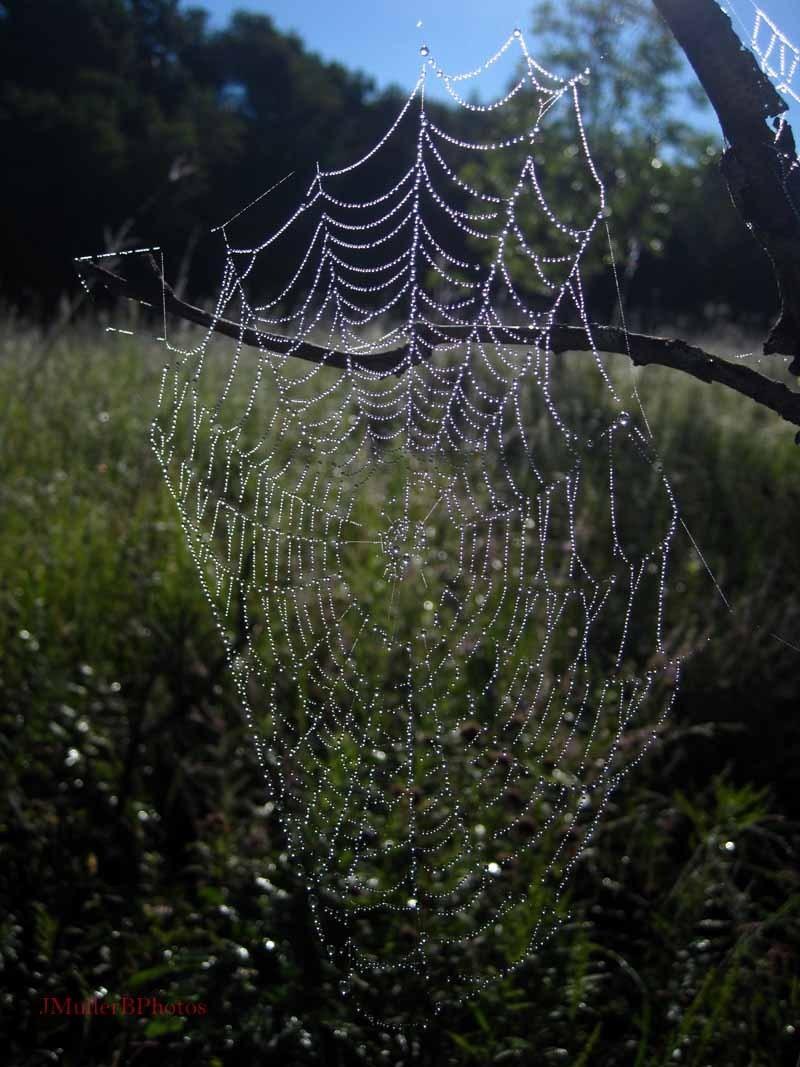 Shining Web in Tree