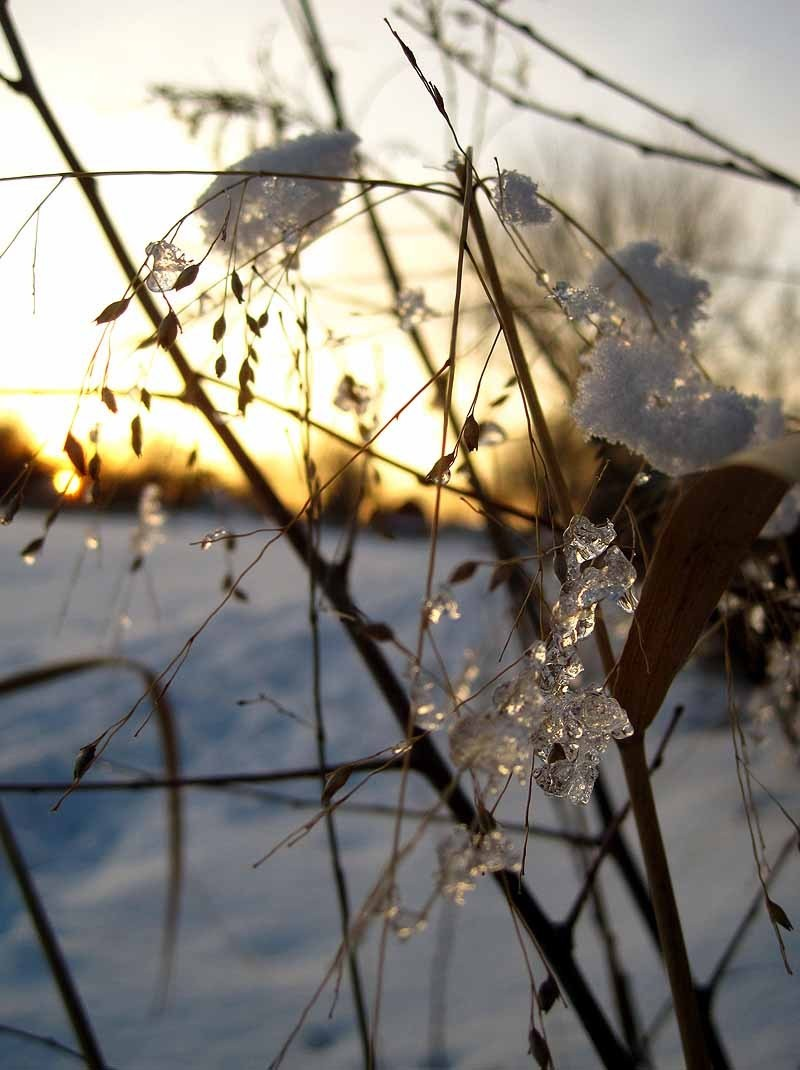 Ice on Switchgrass at Sunset 3 - February 2013