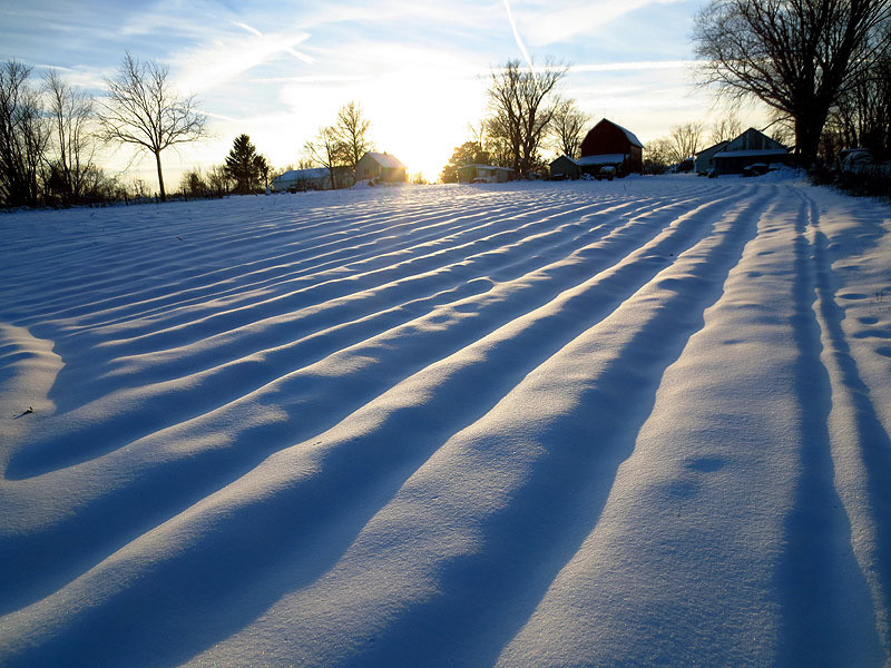 Low Sun on Snowy Furrows - February, 2013