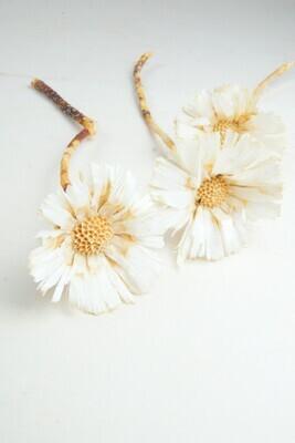 Hailey Protea Rosette | weiß