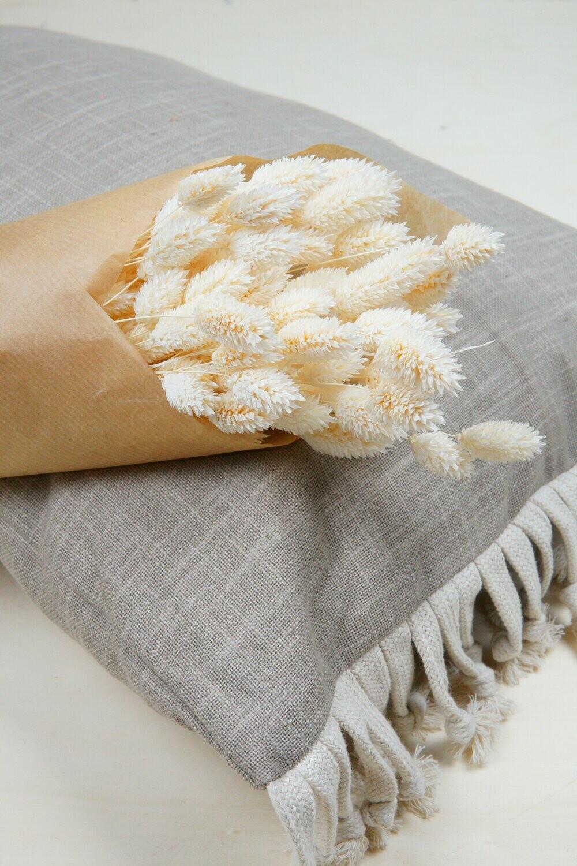 Phalaris | Trockenblume weiß gebleicht