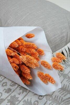 Phalaris | Trockenblume orange gefärbt | XL Bund