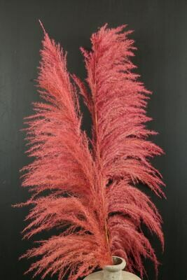 Pampasgras | Trockenblume | dusty rosa