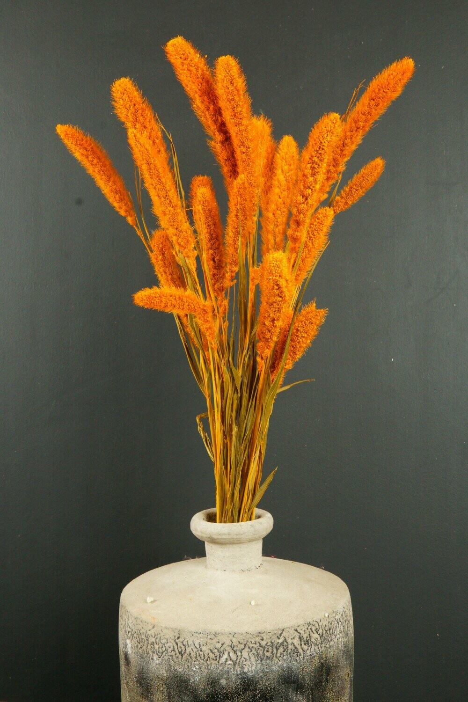 Setaria | Trockenblume | dusty orange