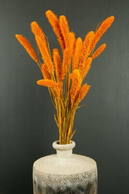 Setaria | Trockenblume | dusty orange