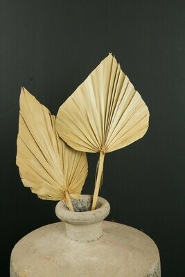 Palm Speer | Trockenblume | Natur
