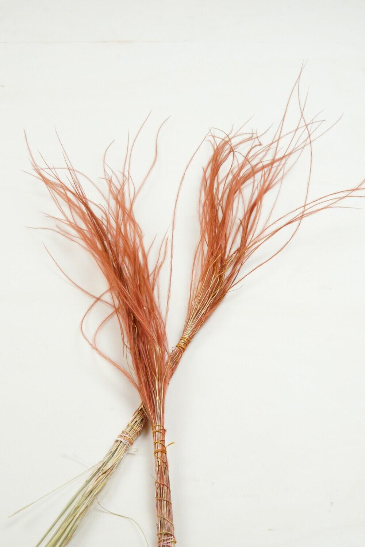 Stipa | Federgras | brown