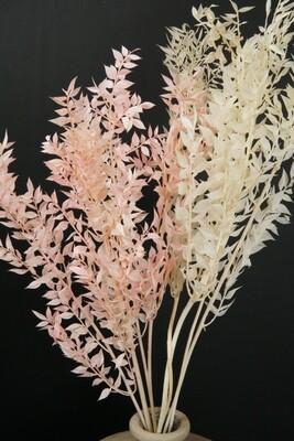 Ruscus | Tockenblume | rosé