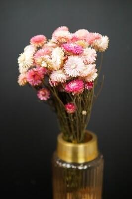 Strohblume | Trockenblume | rosa