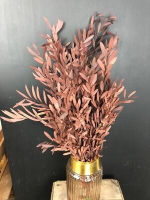 Eukalyptus nicoli | getrocknet | gefärbt