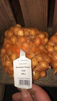 Pflanzzwiebeln   Stuttgarter oder Braunschweiger