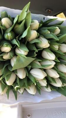 Tulpen im Bund | Vorbestellung | Pre-Order