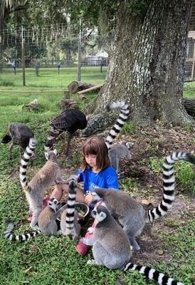 Lemur And Friends Interactive Tour