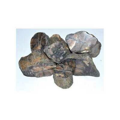 1 lb Chiastolite untumbled stones