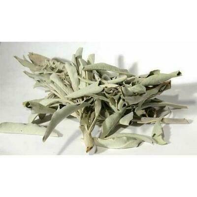 White Sage 1oz (Salvia Apiana)