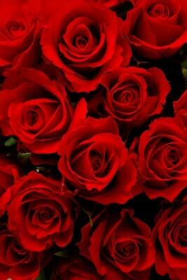 Rose scented - 19